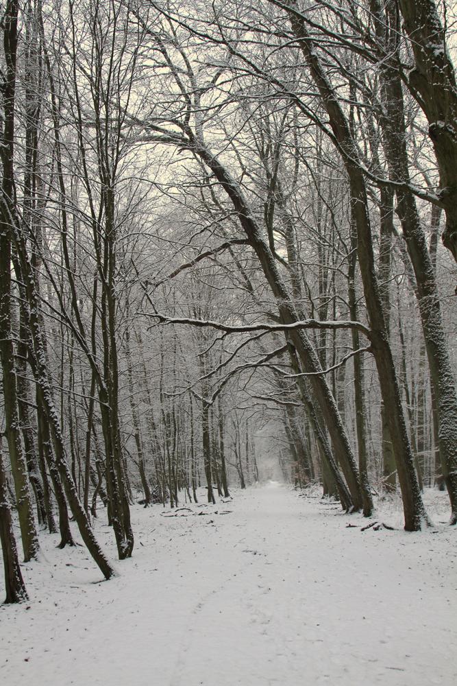 Verschneiter Rundweg