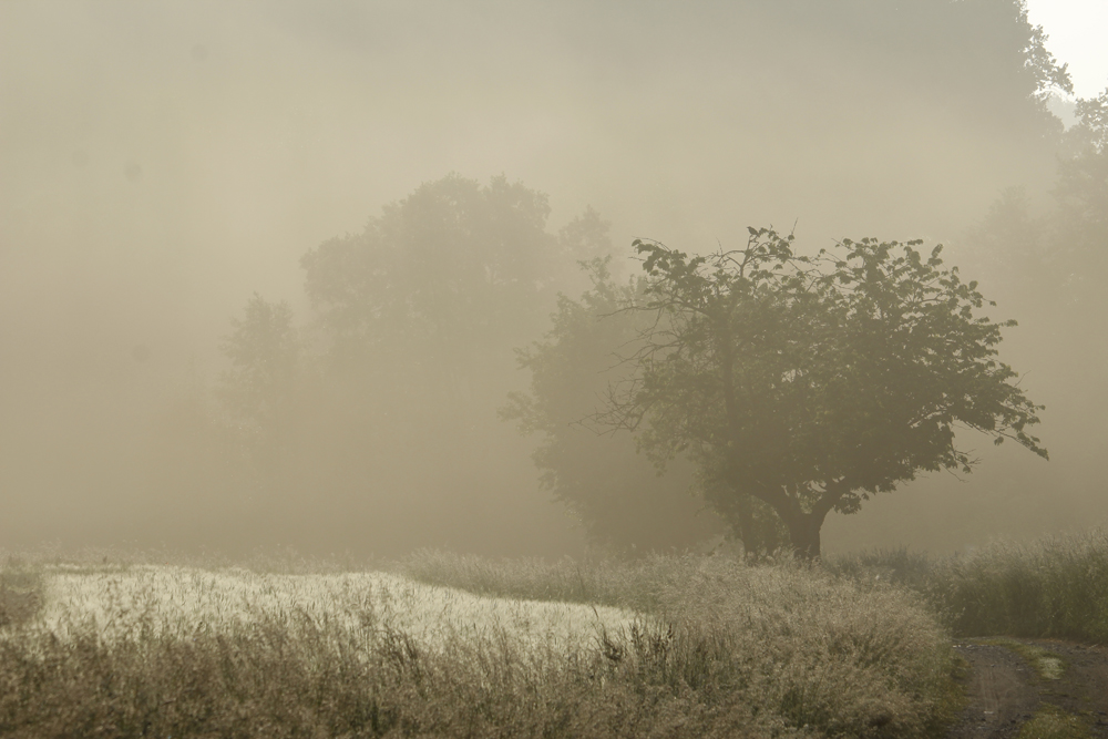 Odenwald © Matthias Lothhammer