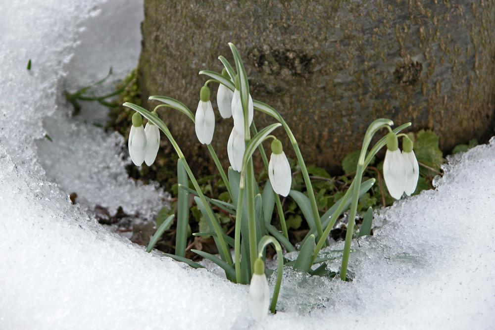Blüten möglichst ganzjährig