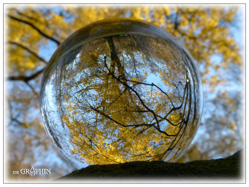 Gold-Laub-Kugel - Botanischer Garten DA © Jennie Bödeker