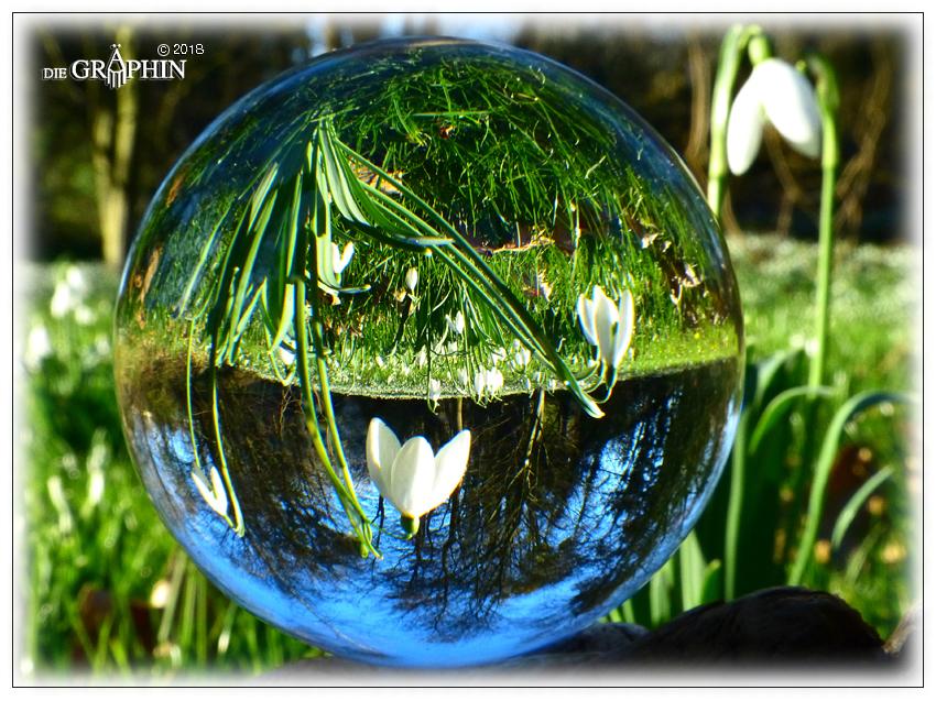 Schneeglöckchen in ungewohnter Perspektive - Botanischer Garten © Jennie Bödeker