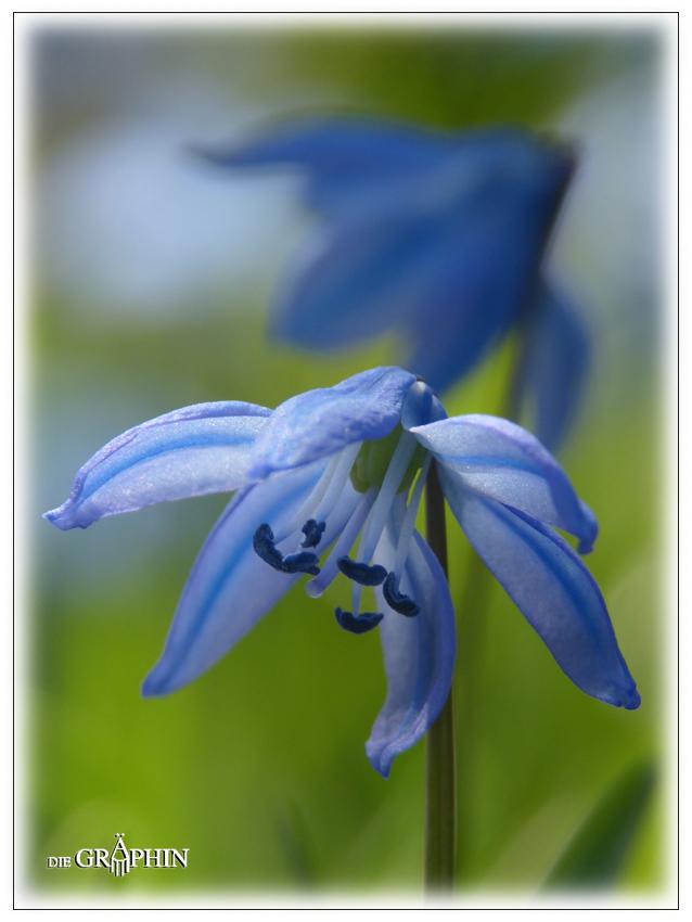 Blauzilla - Botanischer Garten DA © Jennie Bödeker