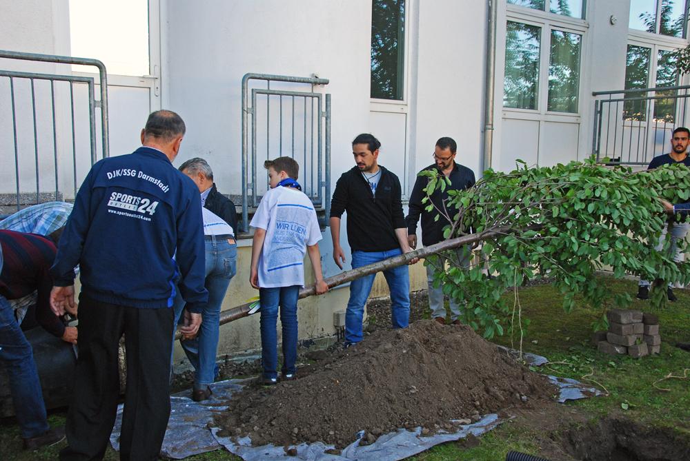 Baumpflanzung als Gemeinschaftsaktion