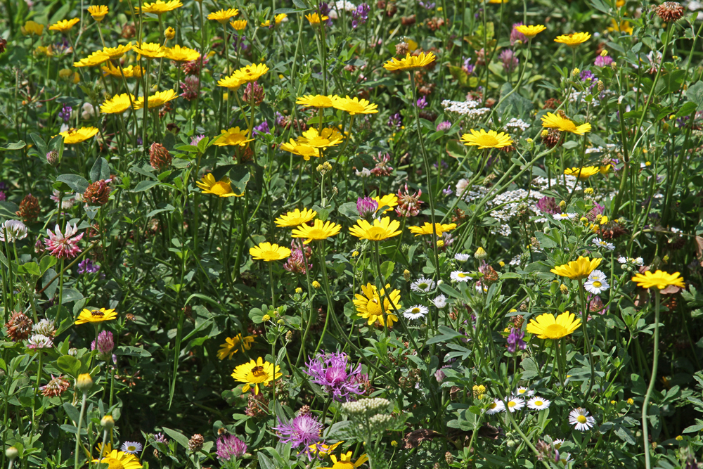 Vielfalt an Blühpflanzen