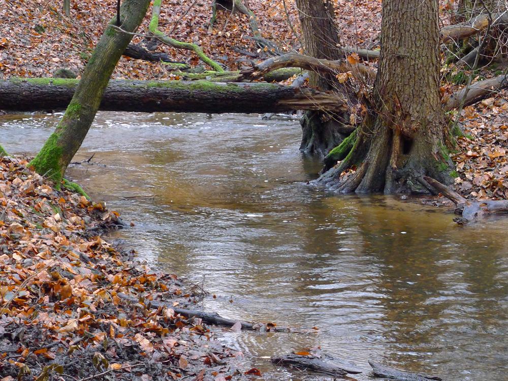 Wassermassen nicht nur im Ruthsenbach
