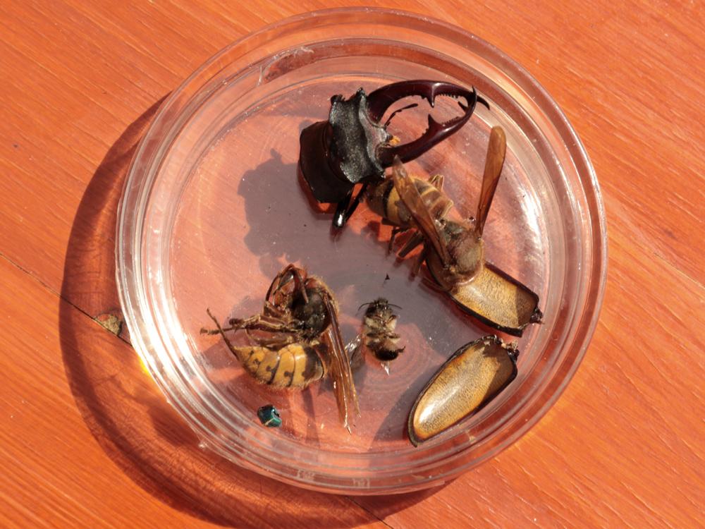 Insekten als typisches Fledermausfutter