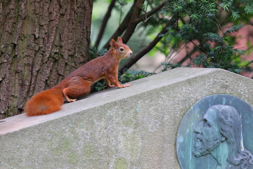 Eichhörnchen sind zahlreich auf dem Waldfriedhof