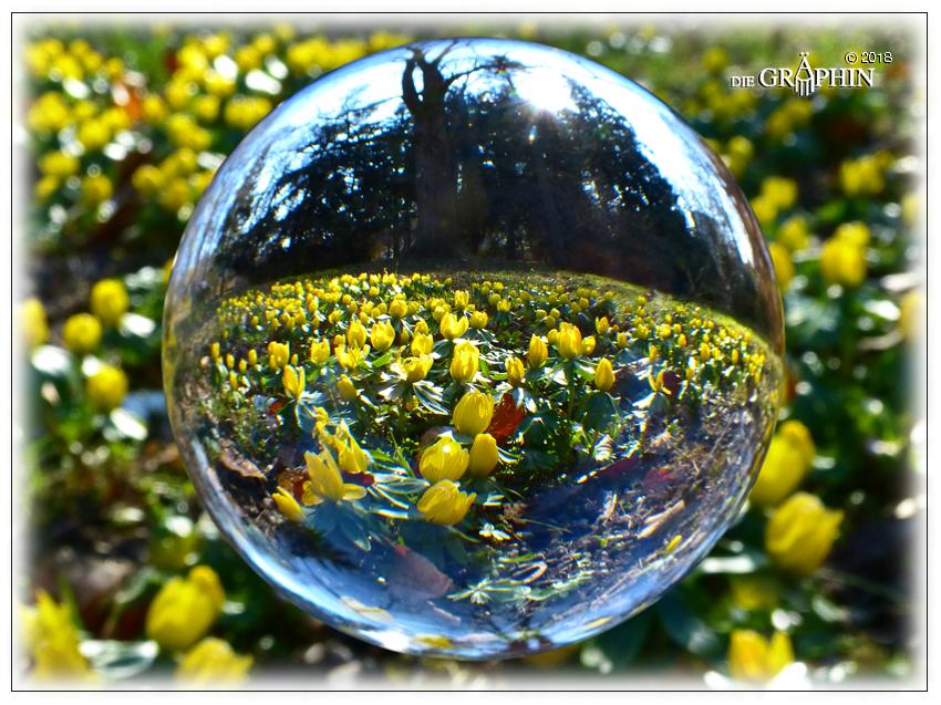 Winterlinge - Botanischer Garten © Jennie Bödeker