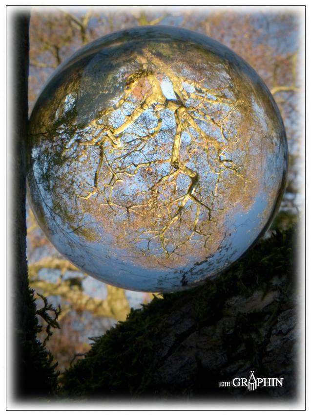 Platanen-Kugel - Botanischer Garten DA © Jennie Bödeker