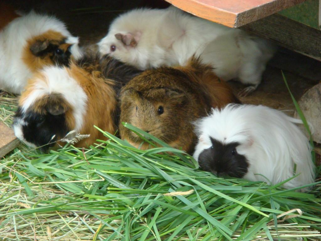 Bella, Bonitta und Coco (t)