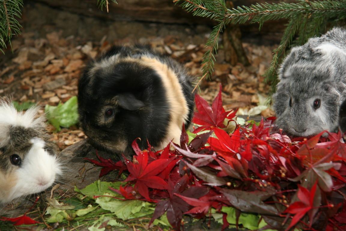 Udina, es wird Herbst