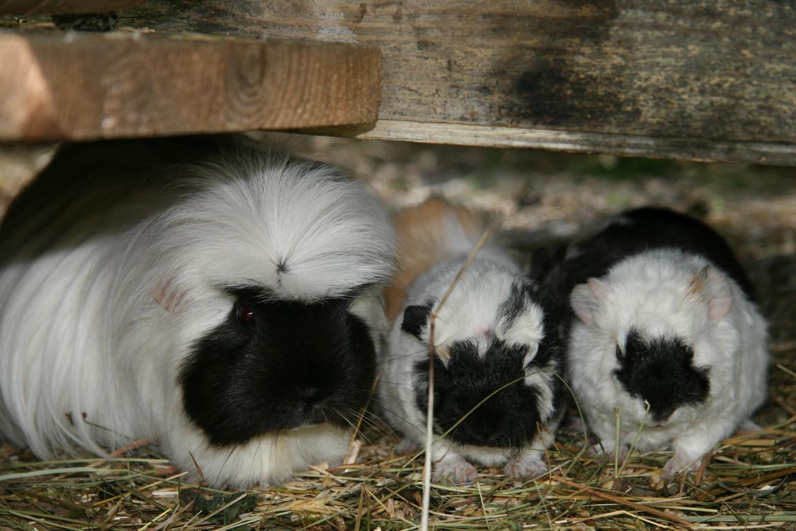 Bella mit ihren Babies