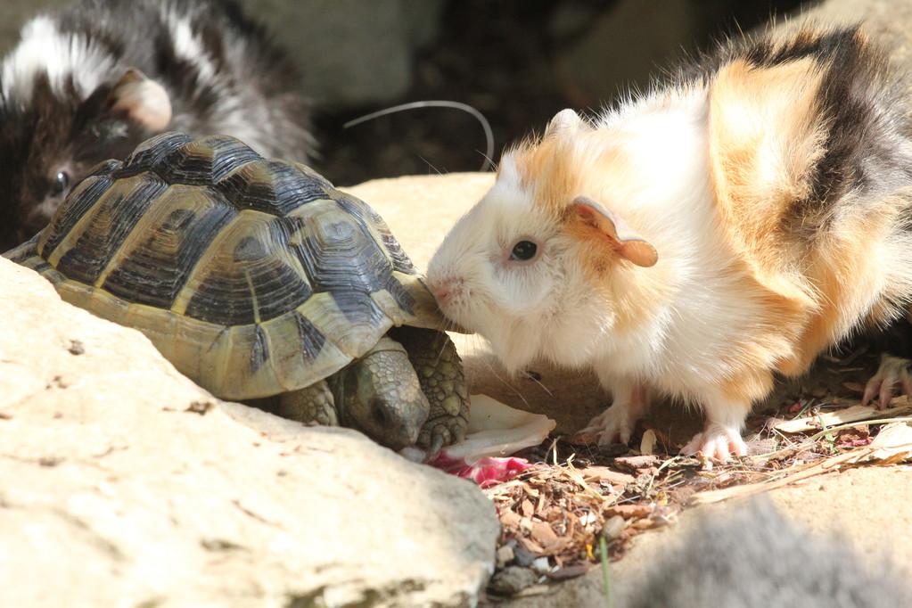 Fatma küsst die Schildkröte, 5.2011