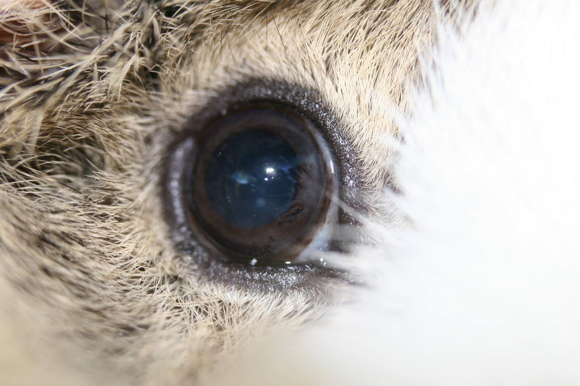Auge von Nica