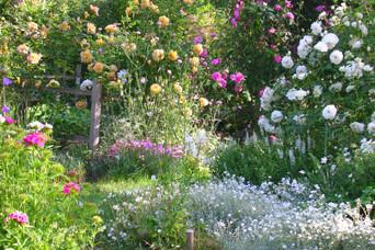 Wolf im Garten - Gartengestaltung