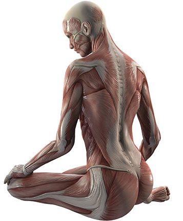 Rôle des fascias dans les douleurs musculaires chroniques