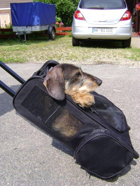 Jule noch zu Beginn der Behandlung im Hundewagen in 2012