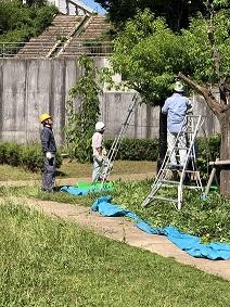 剪定スタッフ講習会(姫路市開催)