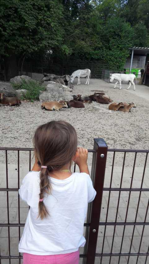 Ziegen und Esel zum streicheln im Tierpark Ulm