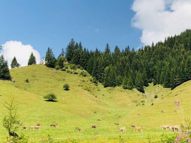 Kuhweide und Pferdekoppel direkt neber der Hütte im Allgäu
