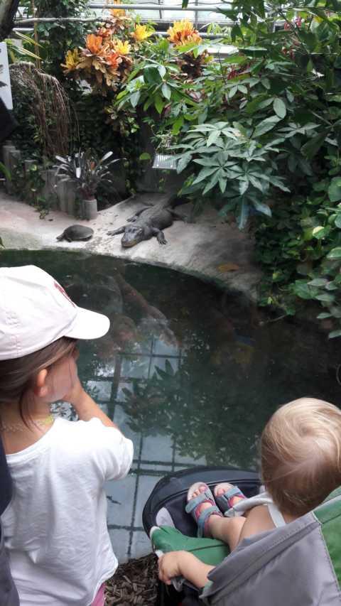 Krokodil hautnah mit Schildkröte im Tierpark Ulm