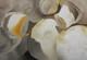 Champigons-03 40 x 58 28/12/2013