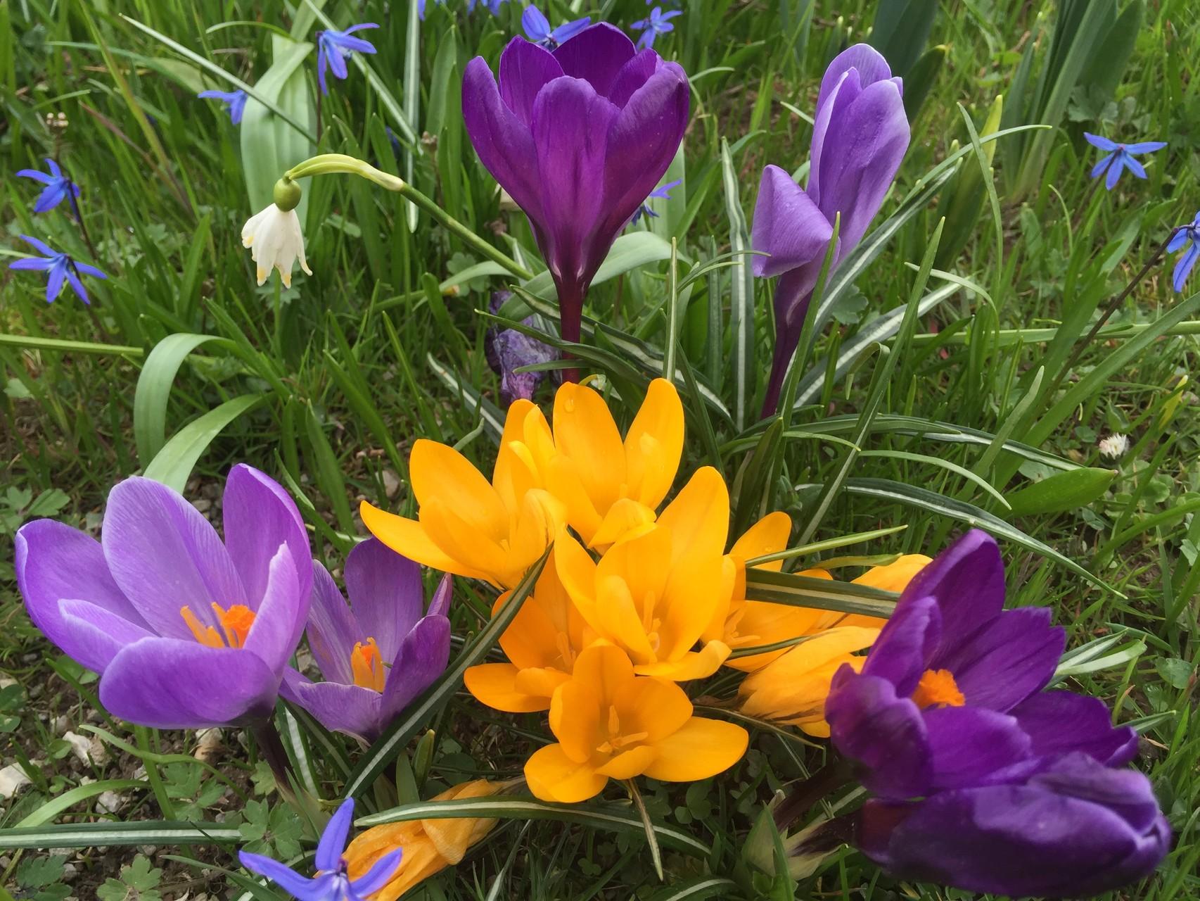 Frühlingsblümchen