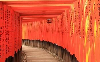 Weg im Fushimi Inari-Taisha