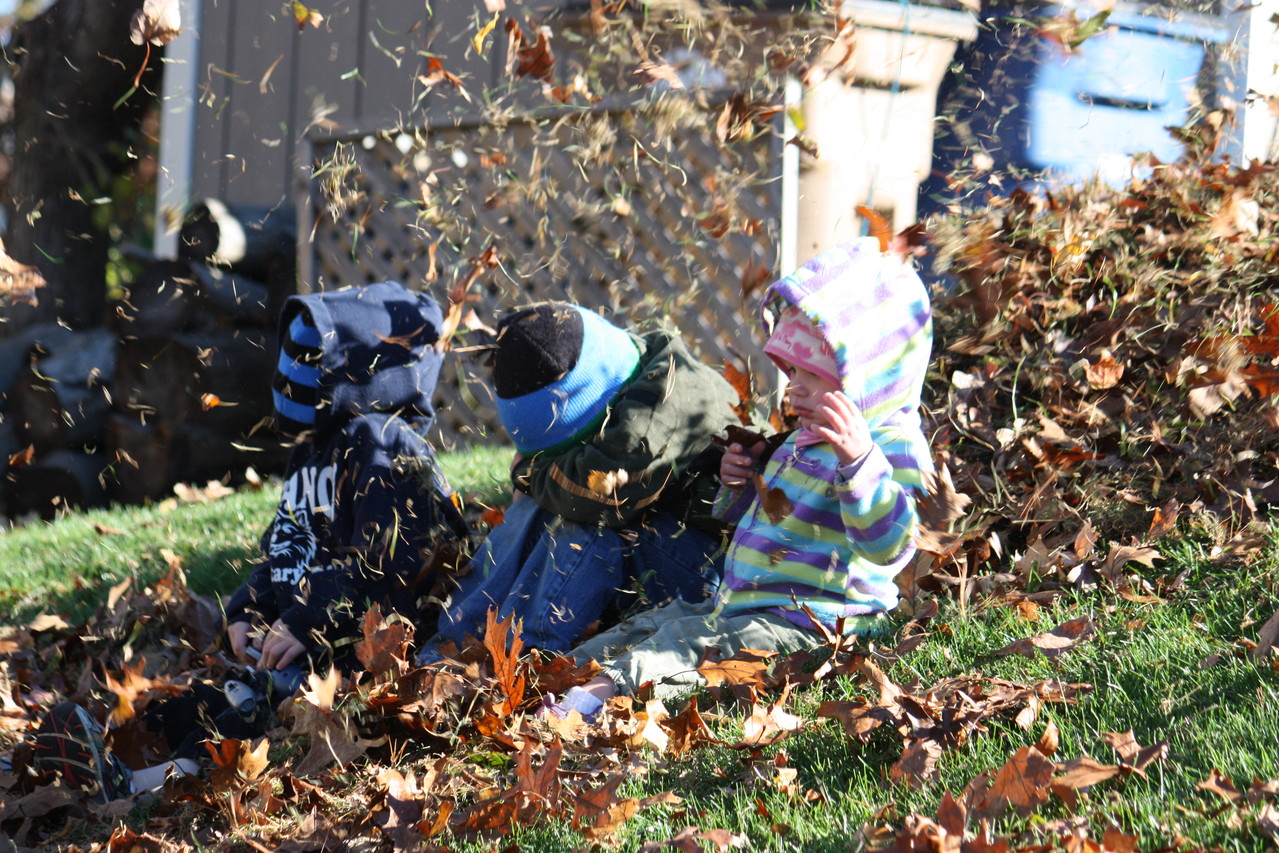 Playing in the leaves... My dad was using the blower to blow the leaves on the kids.