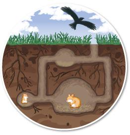 Hamsteropvang hamster graven tunnels natuur natuurlijke behoeften wild