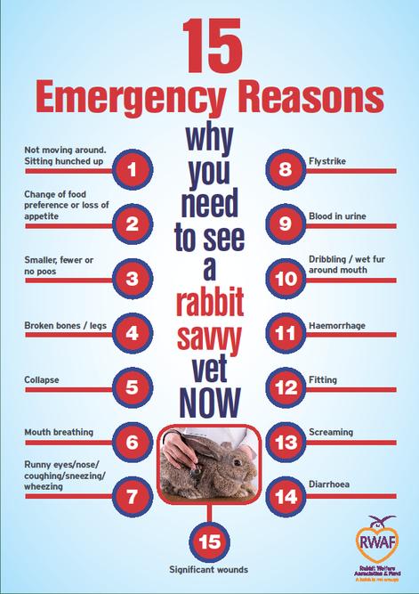 Ziek konijn konijnenopvang Het Knaagtandje medisch