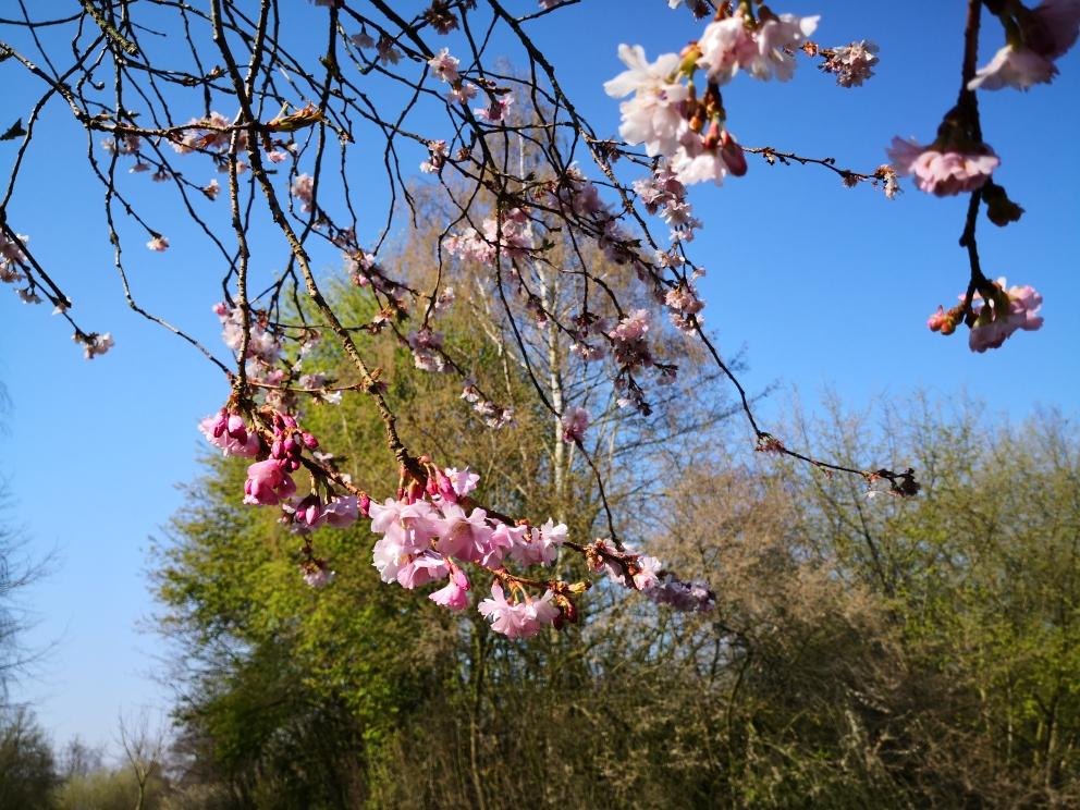 Frühlingsblühen