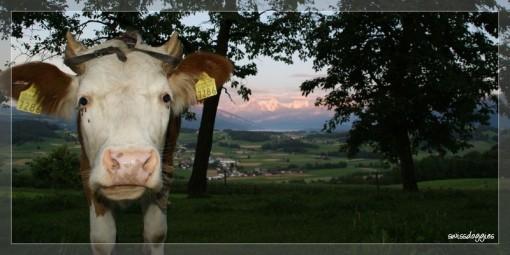Juli 09: Abendspaziergang in Burgistein