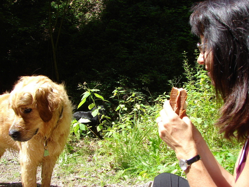 Roxy: ich darf gar nicht hinschauen - würd ja so gern... - ein Biss und weg!