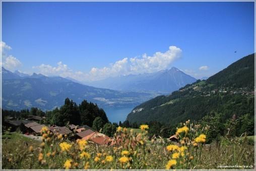Waldegg oberhalb von Interlaken - Spaziergang der swissdoggies 27.06.2010