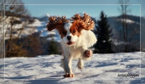 Herrlich, wenn der Schnee vor der Haustüre liegt, da lässt es sich toll rumflitzen.