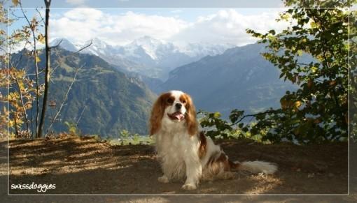 Okt. 09: Ausflug auf die Harder Kulm oberhalb von Interlaken
