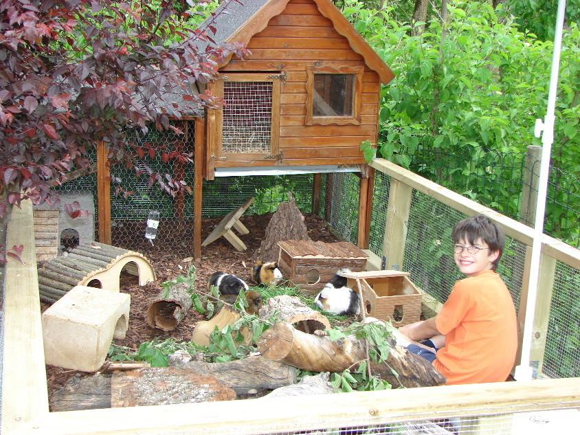 unsere kaninchen und meerschweinchen. Black Bedroom Furniture Sets. Home Design Ideas