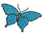 1 Schmetterling