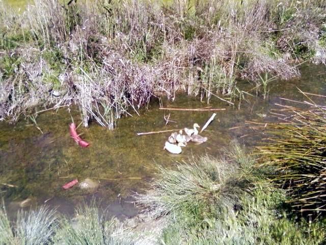 Paseo en el campo y rio - Sortie au champ et à la rivière