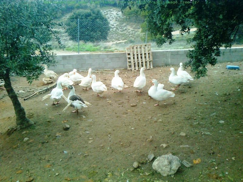 Corral de las ocas - Parc des oies