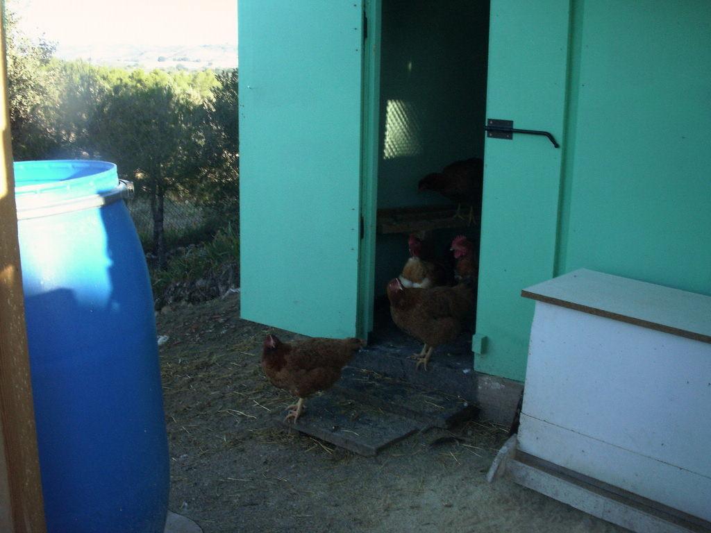 El gallinero - Le Poulailler