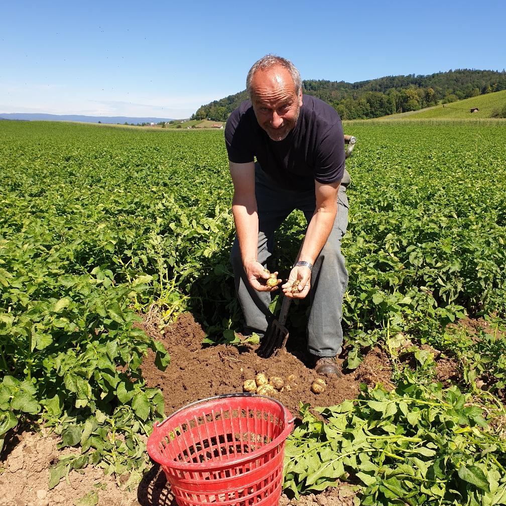 Koni am Baby Kartoffeln ausgraben