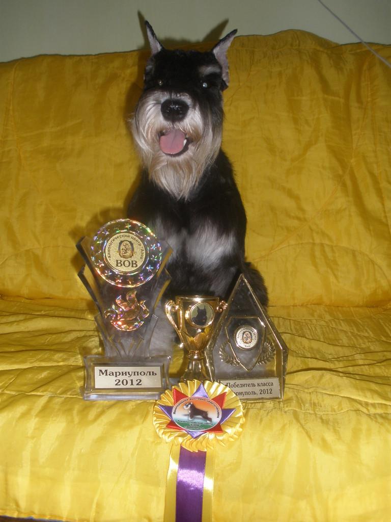 Мой чемпион-Алекс