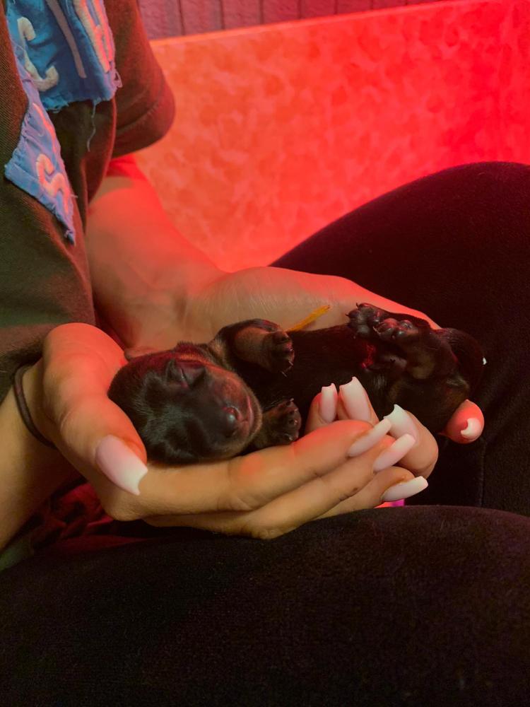 Taffy's birth