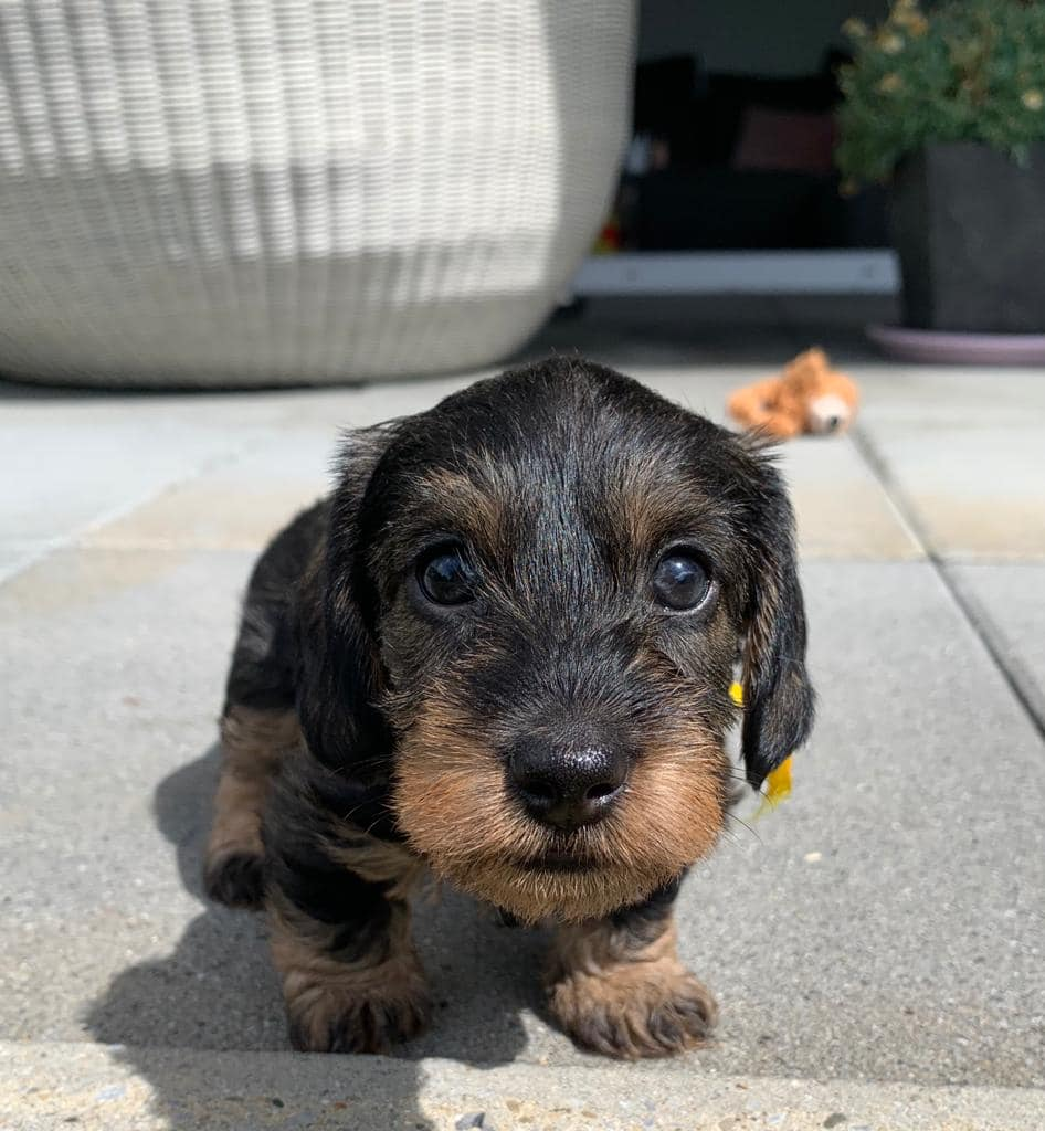 Taffy, 4 weeks old