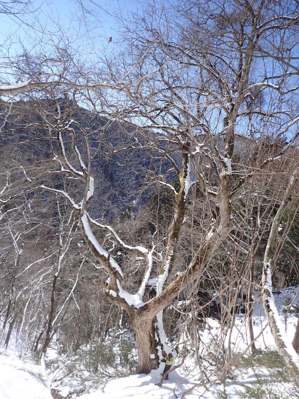 空の青と雪の白。素敵な山の世界