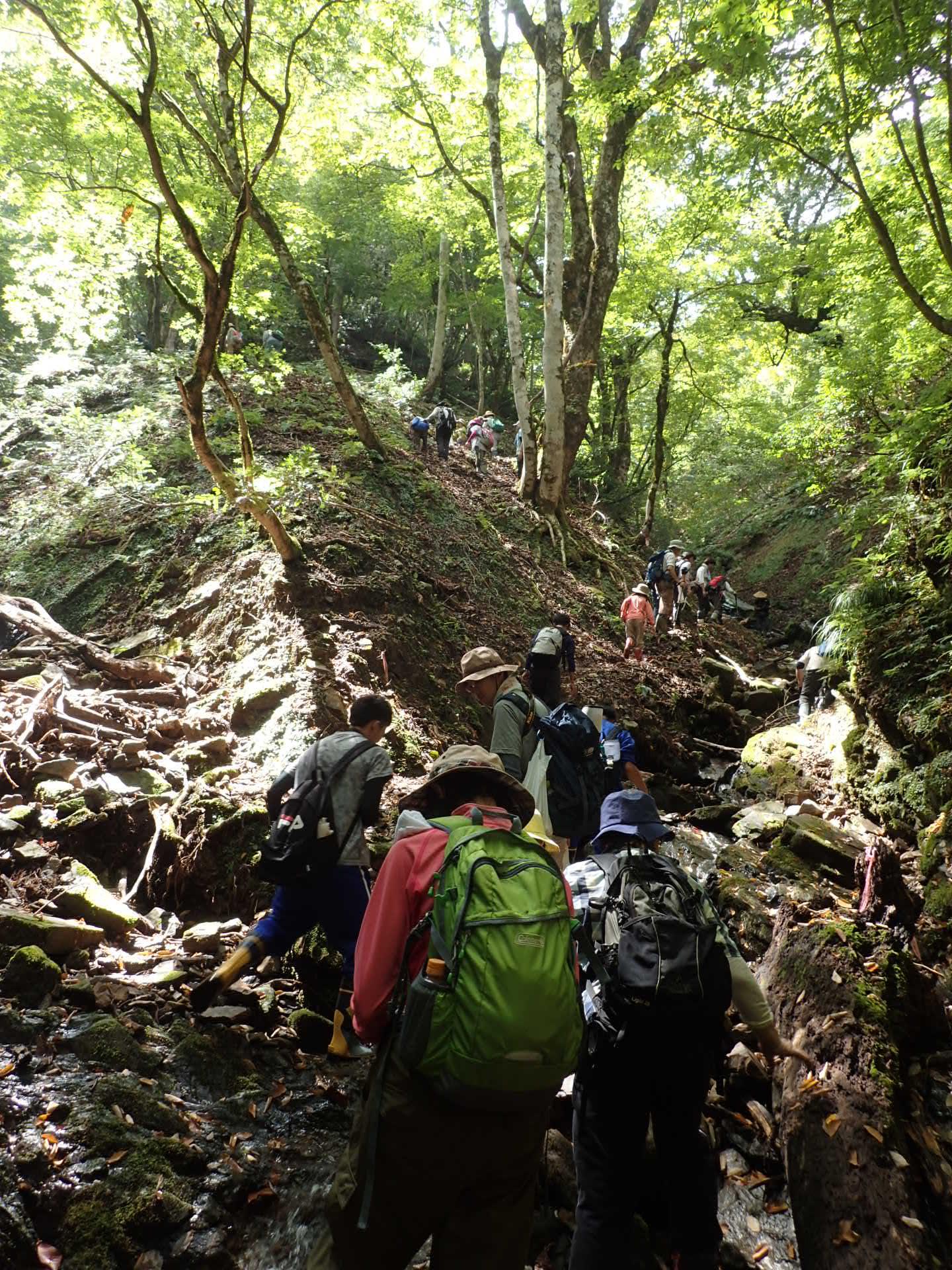 栃の木のある谷は、キラキラ輝く渓流