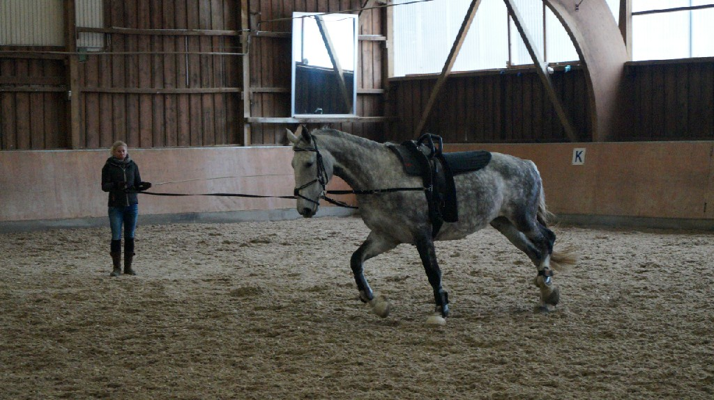 Voltipferd Maja (7 Jahre)