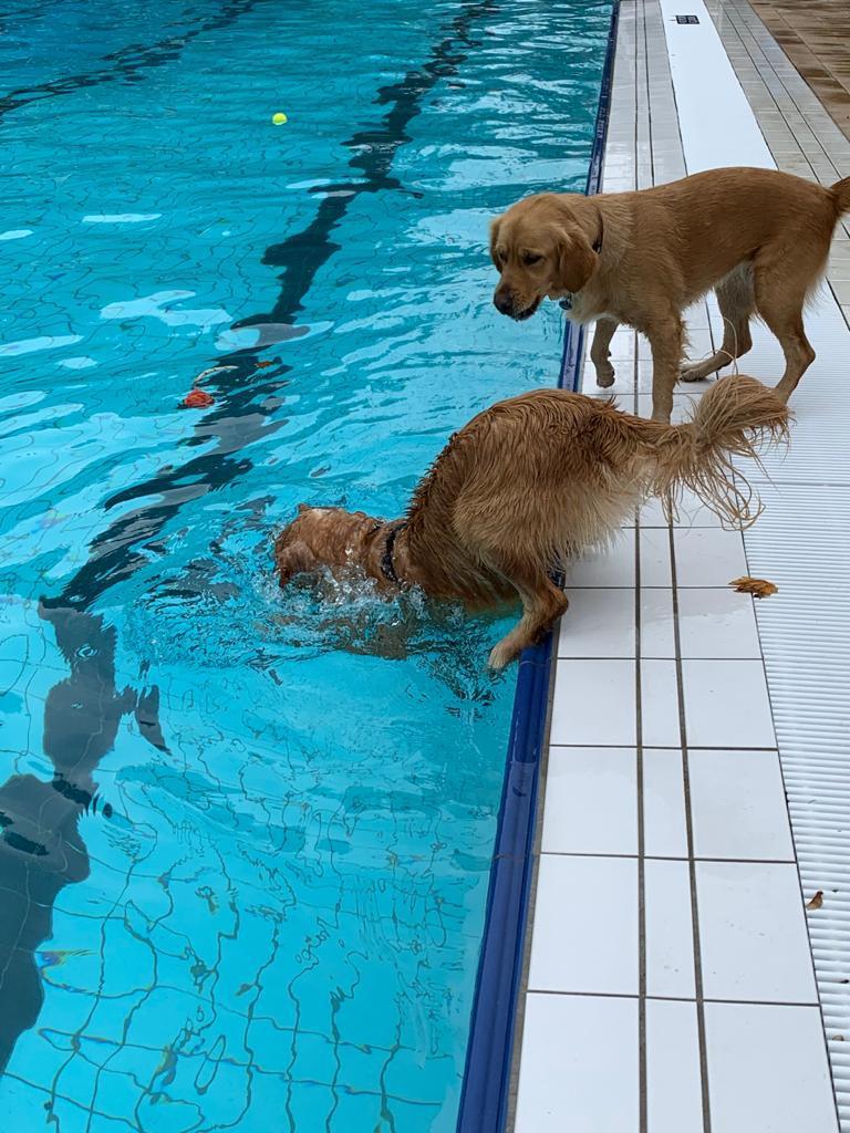 Blomster LILLY und Chess Flora LUCY waren schwimmen. Oktober20.